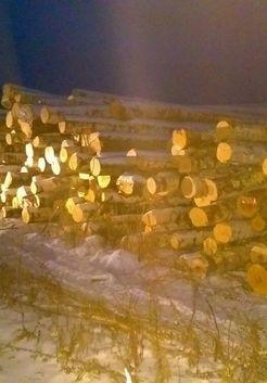 березовые стволы для распилки на дрова