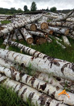 березы на распил для дров