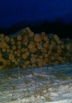 дерево для будущих дров