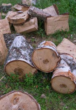 заготовка березовых дров