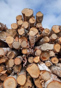 стволы березовых деревьев для дров